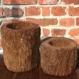 Pots en fougère arborescente Ø 8 cm H 12 cm