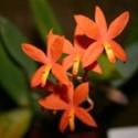 Botanique E