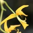 Botanique G