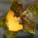 Botanique O