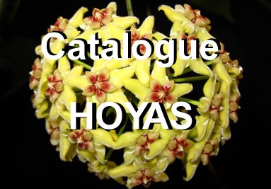 Catalogue Hoyas